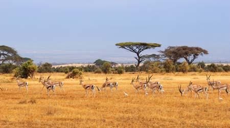 Kenya landscapes activity - art and design activity for kids