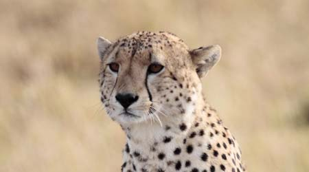 Safari Animals Archives - Kenya Safari Holidays - Africa Safari ...