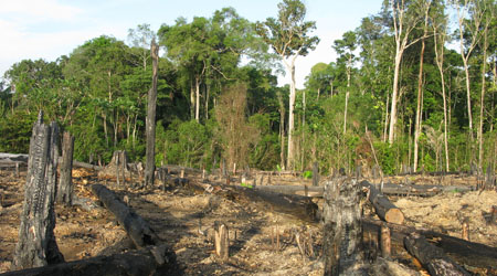 Rainforest Deforestation for primary kids