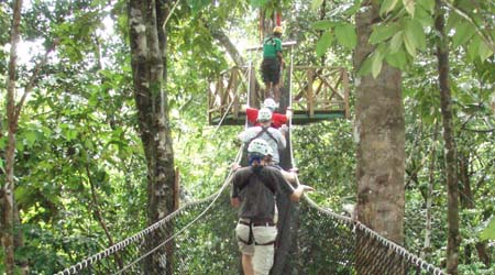St Lucia Rainforest Rope bridge. Walking through the canopy & Rainforest - Canopy Layer for primary kids