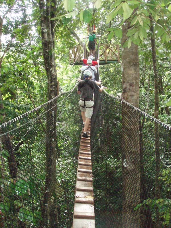 Walking through the canopy & Rainforest - Canopy Layer for primary kids