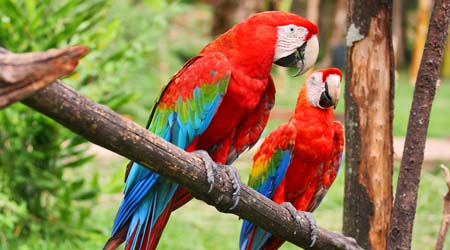 How much do macaws usually cost  Yahoo Answers