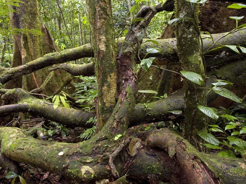 Superior Forest Floor