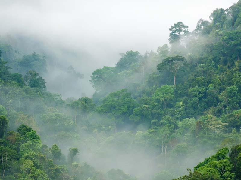 Rainforest Climate - social studies for kids