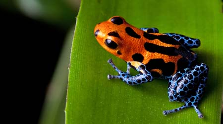 Rainforests animals for primary children