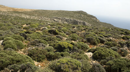 An essay about vegetation typical of a mediterranean climate