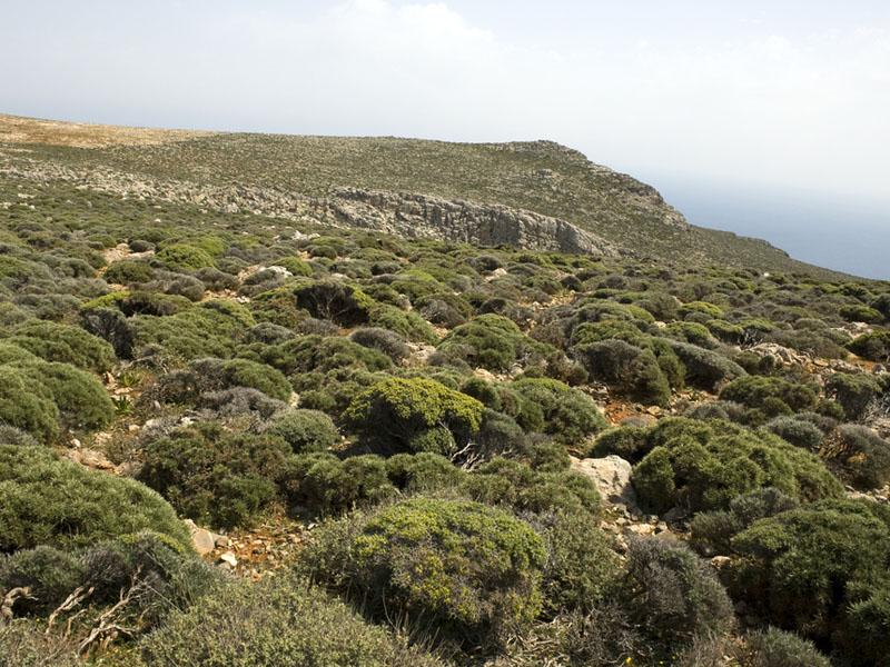 Mediterranean Ecosystems   ecojhb