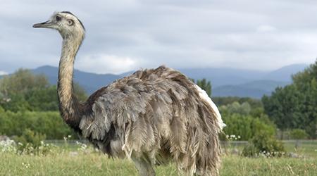 Animals In The Grassland Biome | www.pixshark.com - Images ...