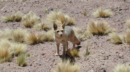 Desert animals for kids