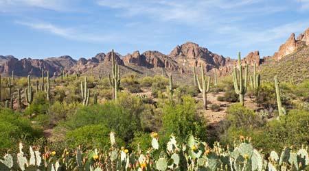 Desert Plants Social Studies For Kids