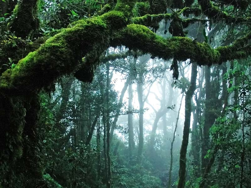 Climate zones social studies the climate of the rainforest is warm and wet freerunsca Choice Image