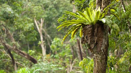 Rainforest Canopy Layer For Primary Kids