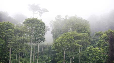 Rainforest Emergent Layer For Primary Kids