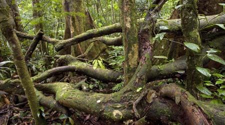 Rainforest Forest Floor For Primary Kids