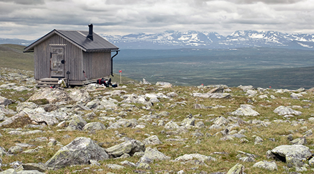 Tundra regions for kids - location, climate, plants and animals