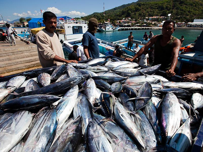 http://www.oddizzi.com/wp-content/uploads/2012/08/img-farming-poleandlinefish_big.jpg