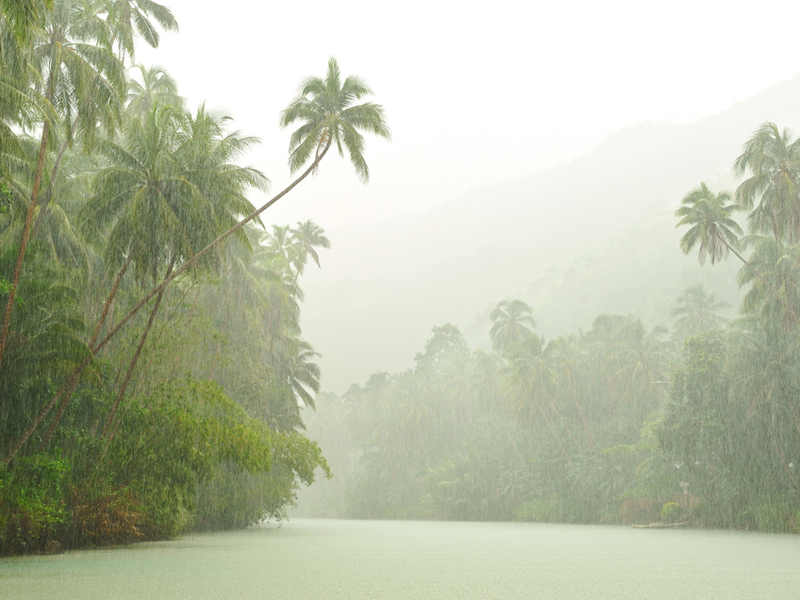 Rainforest climate social studies for kids rain falling in a tropical rainforest freerunsca Choice Image